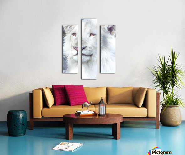 Juvenile White Lion  Canvas print