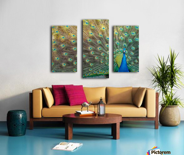 Peacock Feathers Full Frame Canvas print