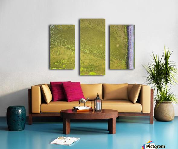 Fish Pond Algae Canvas print