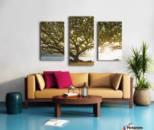 Hawaii, Kauai, Hanalei Bay, Large tree on beach, Sun shining. Canvas print