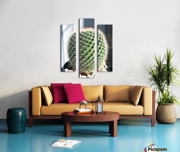 closeup green cactus texture with morning sunlight Canvas print