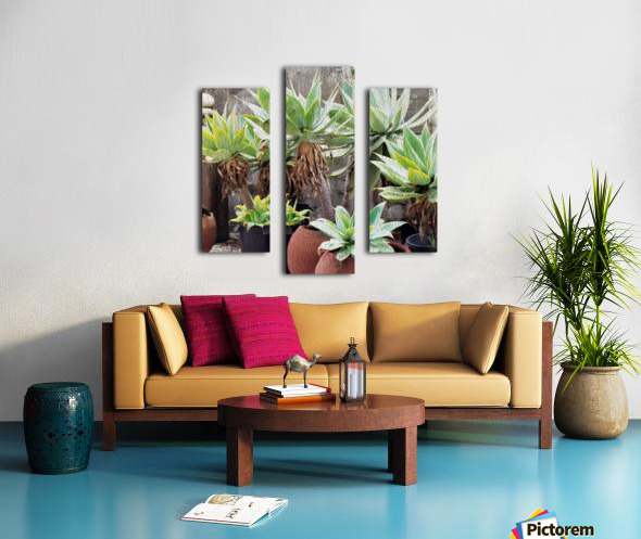 Potted Agave Plant Canvas print