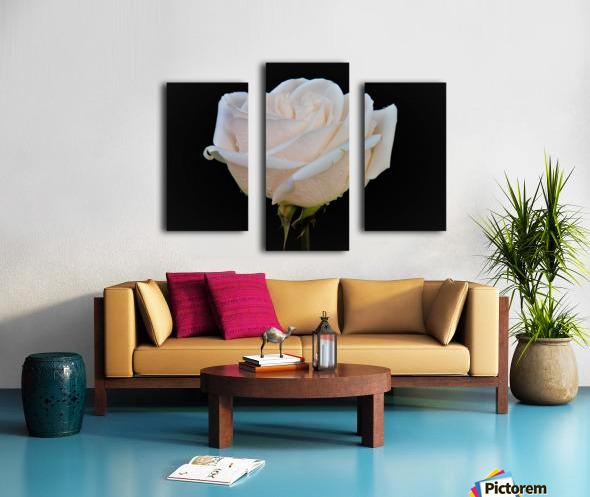 Calming rose Canvas print