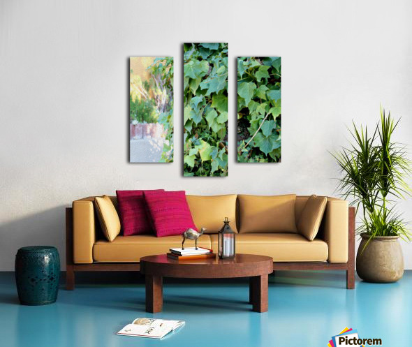 Green Ivy Canvas print