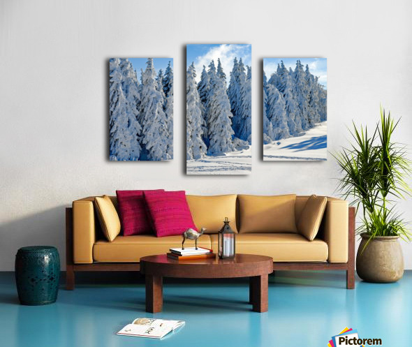 Snow  Crusted Trees Rocky Mountains Canvas print