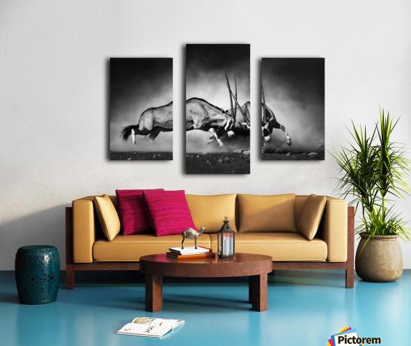 Gemsbok fight Canvas print