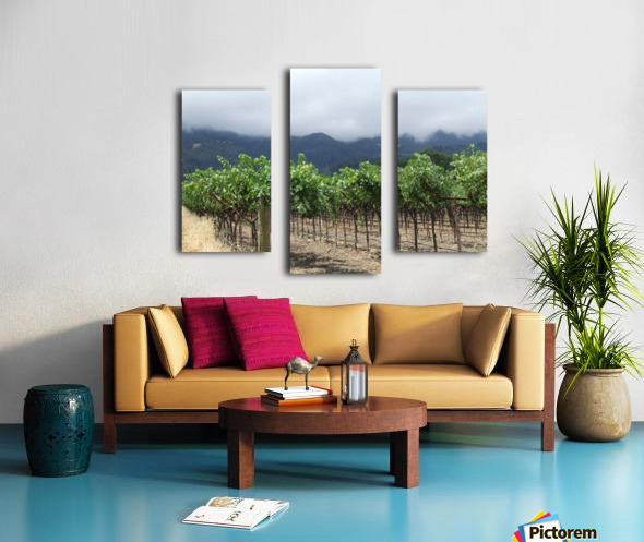 Napa Califoria Grape Vines summer 2007  Canvas print