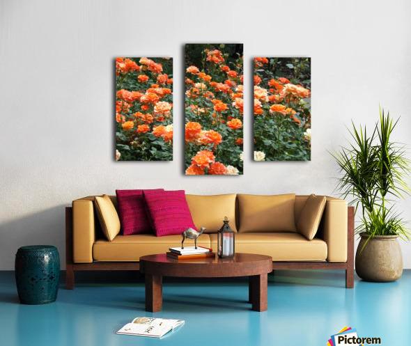 Orange Flowers Growing in Napa Califoria  Canvas print