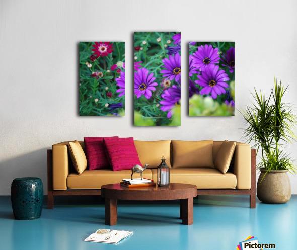 Purple Flowers in Dana Point CA Canvas print