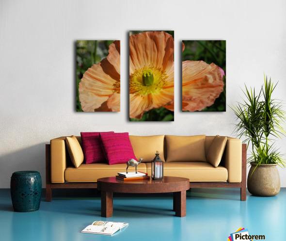 A Poppy Flower Growing Canvas print