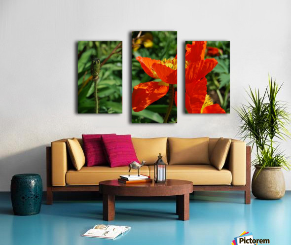 Orange Poppy Flowers Growing Canvas print