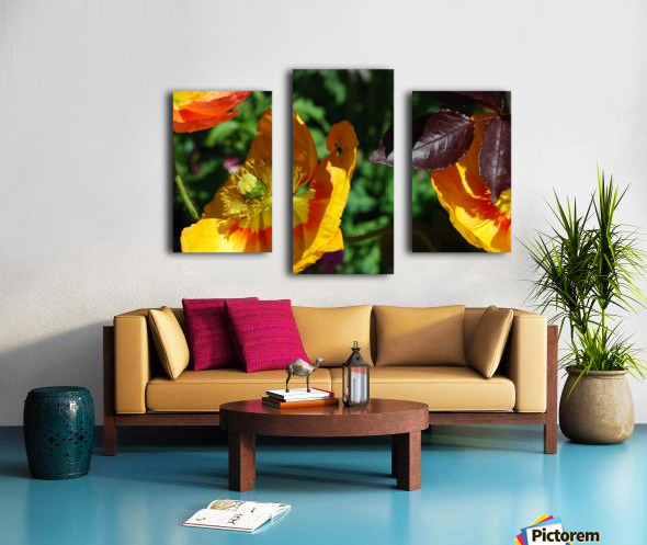 Yellow Poppies Growing in a Garden Canvas print