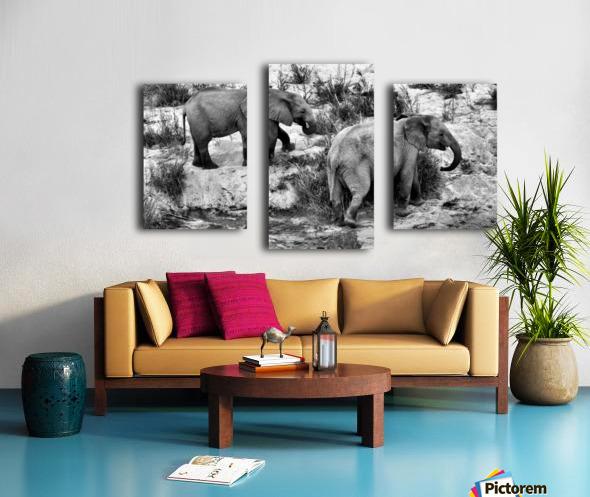 Elephant Youth Canvas print