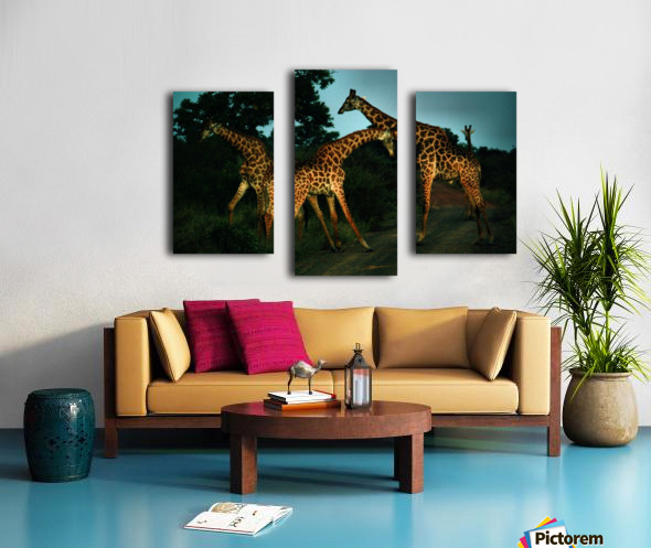 Giraffes South Africa Canvas print