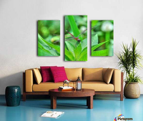 12-4 Orange Dragonfly Canvas print