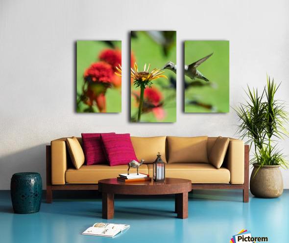 Colibri butinant Canvas print