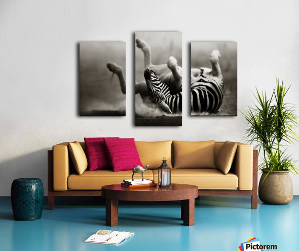 Zebra rolling in the dust Canvas print