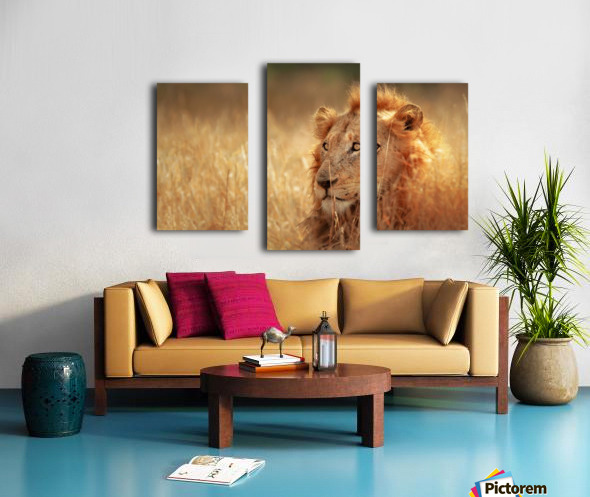 Lion in grassland Canvas print