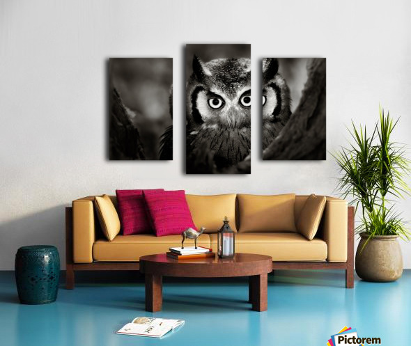 Whitefaced Owl close-up Canvas print