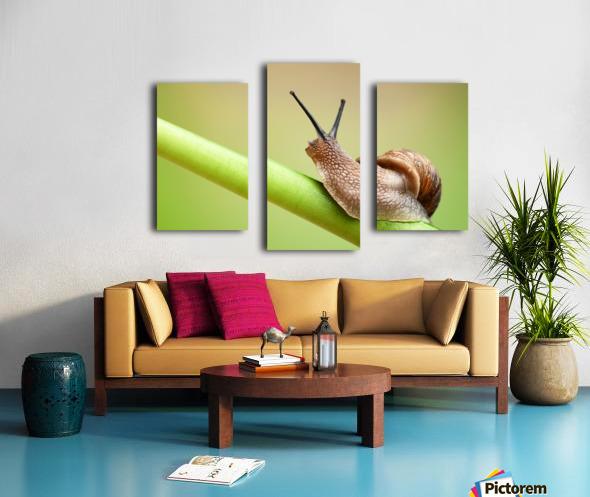 Snail on green stem Canvas print