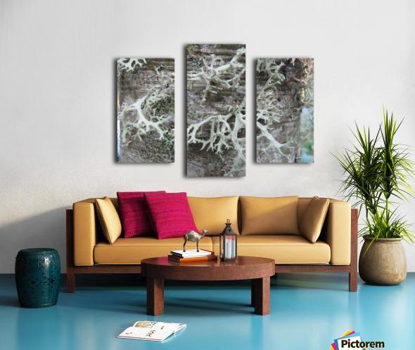 Bark With Lichen 02 Canvas print