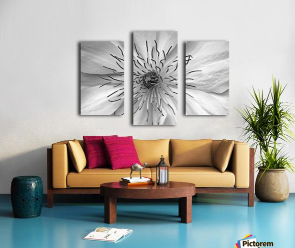 Clematis White Canvas print