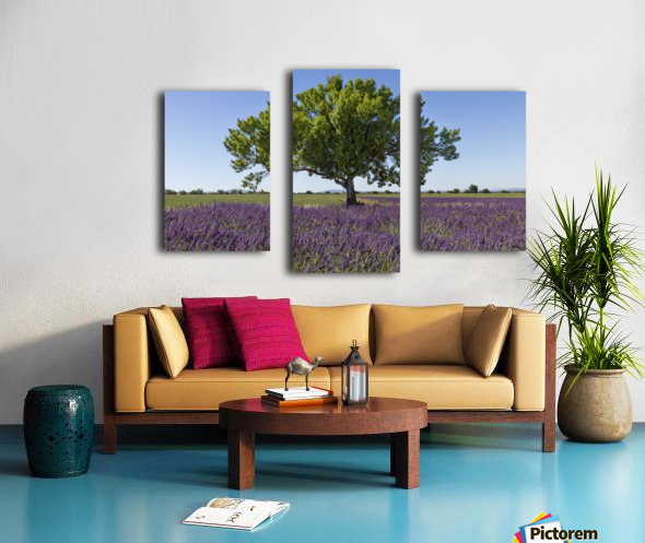 Tree in a lavender field Canvas print