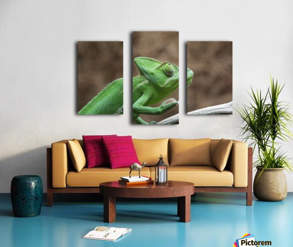 Funny pose of a chameleon Canvas print