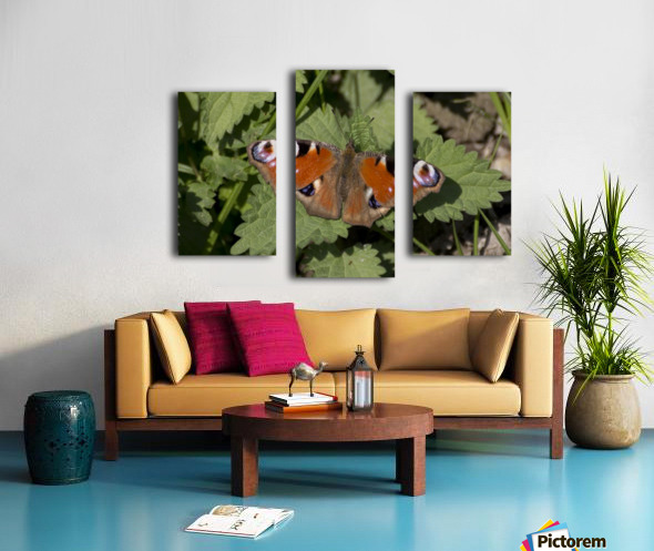 European peacock butterfly Canvas print