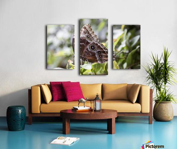 Morpho peleides butterfly Canvas print