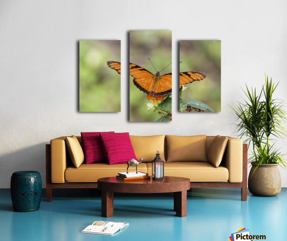 Julia heliconian butterfly Canvas print