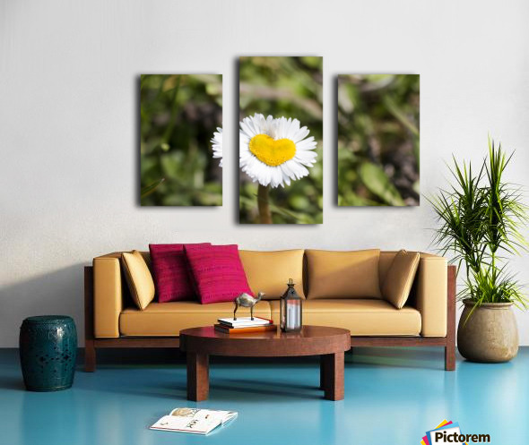 Heart shaped daisy Canvas print