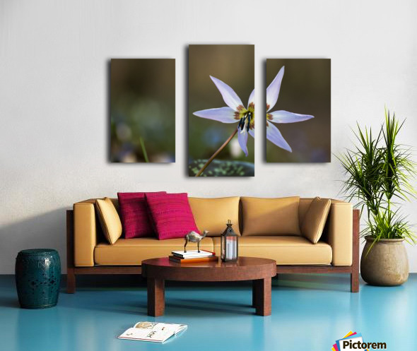 Dogtooth violet Canvas print