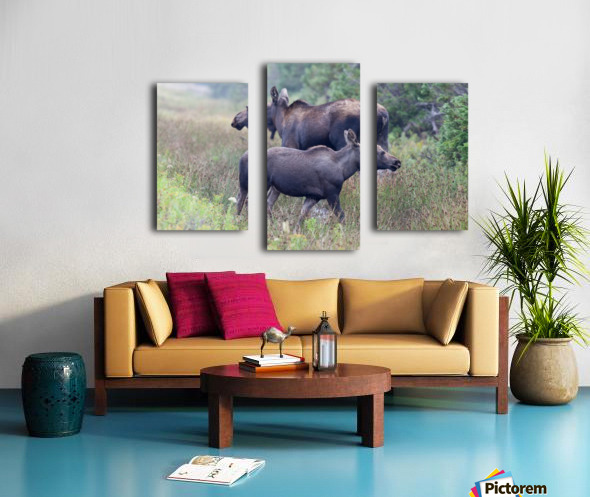 Mom and Calf Moose Canvas print