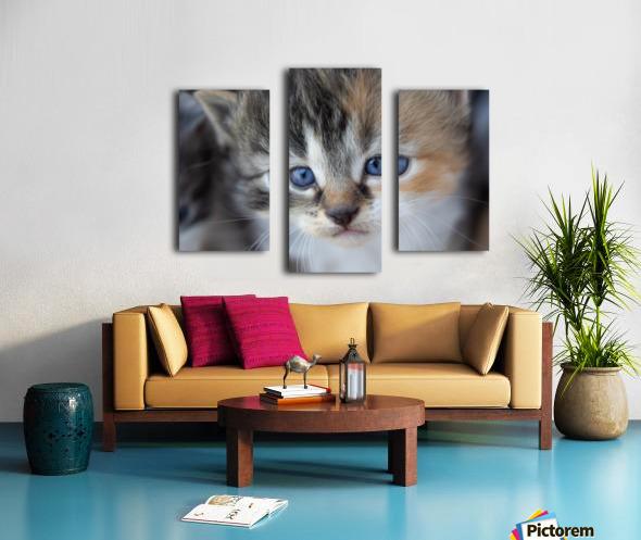 Kitten Face Canvas print