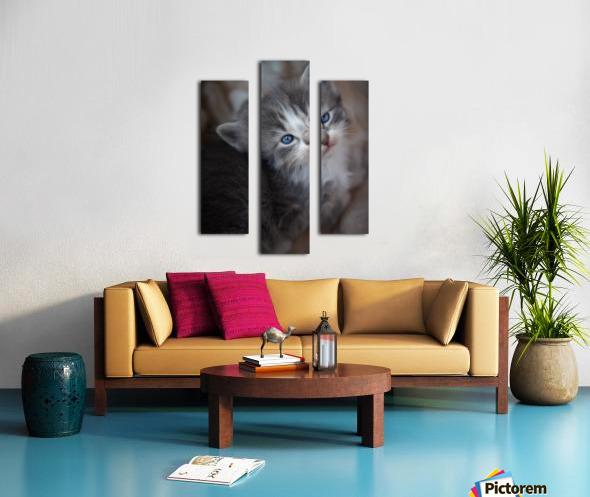 Gray Kitten Canvas print