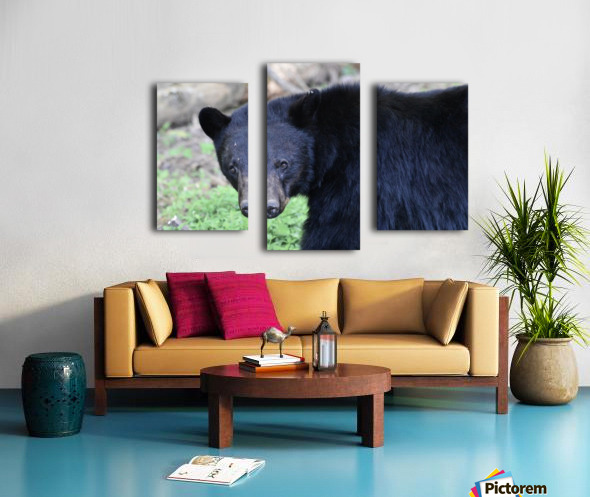 2350- black bear Canvas print