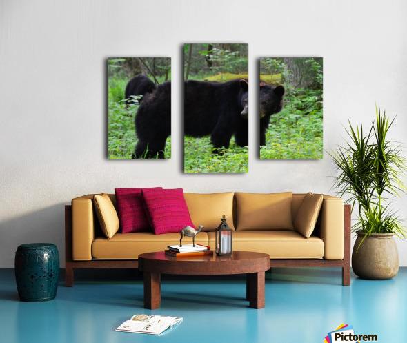 3299-Black Bear Canvas print