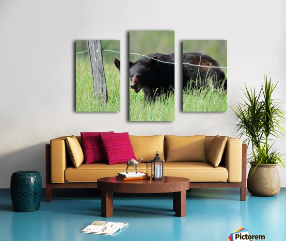 2966-Black Bear Canvas print
