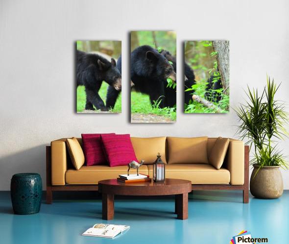 3540-Bear walk Canvas print