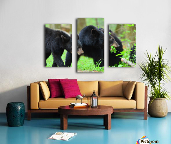 3541- Black bear Canvas print