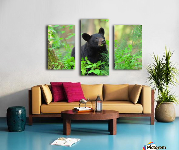 3597-Black Bear Impression sur toile