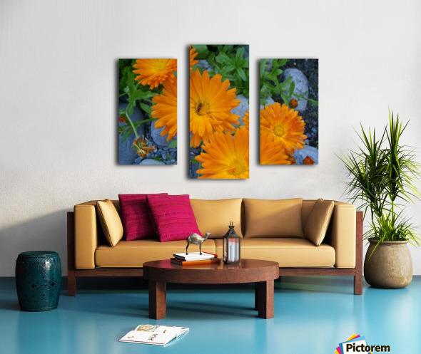 Orange Daisies & Bee Canvas print
