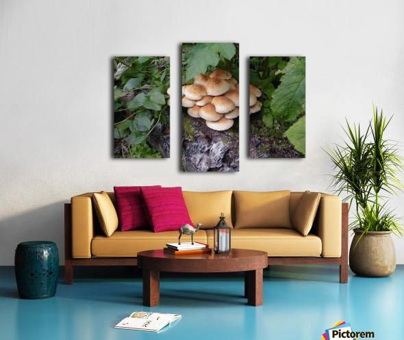 Bun Mushrooms Canvas print