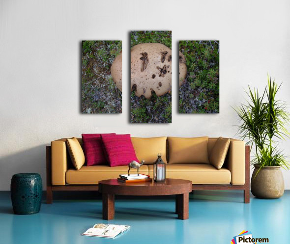 Cookie Mushroom Canvas print