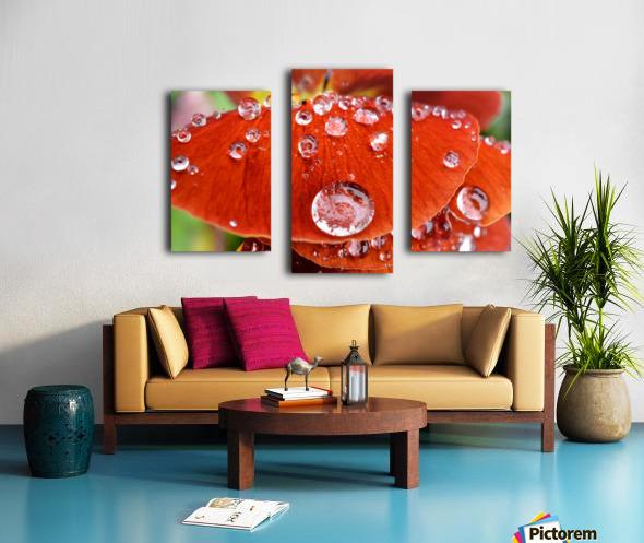 Raindrops On Orange Pansy Petal Photograph Canvas print