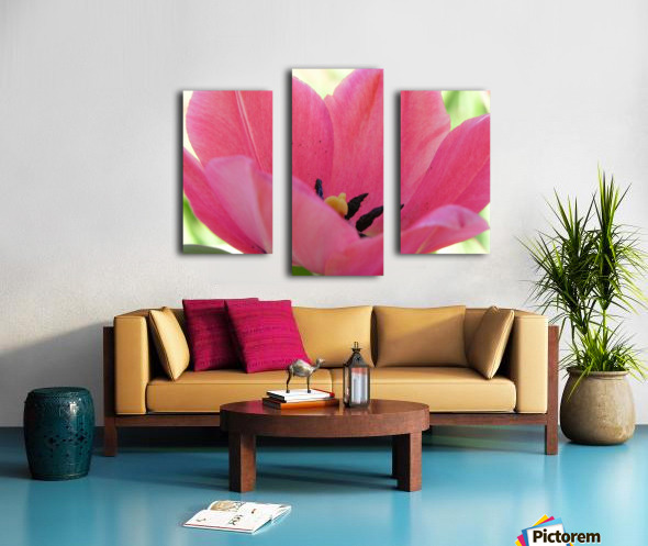Beautiful Pink Tulip Photograph Canvas print