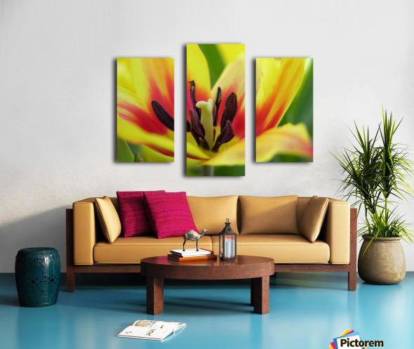 Yellow Tulip Photograph Canvas print