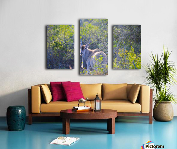 Deer Posing for Photo Canvas print