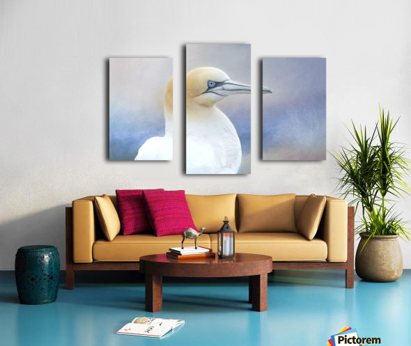Northern Gannet Canvas print